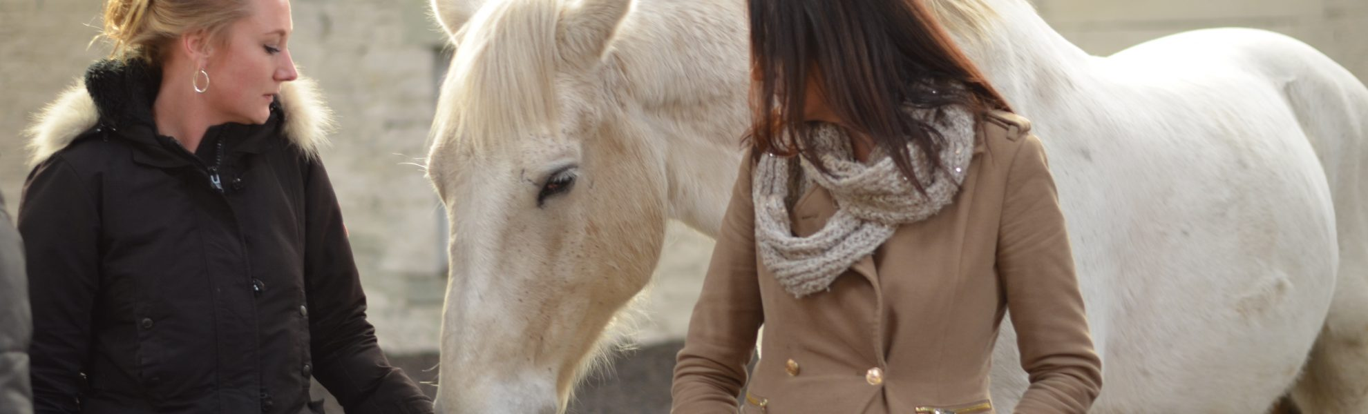 Equine Therapy, Art Group, Aromatherapy, Acupuncture, Mindfulness