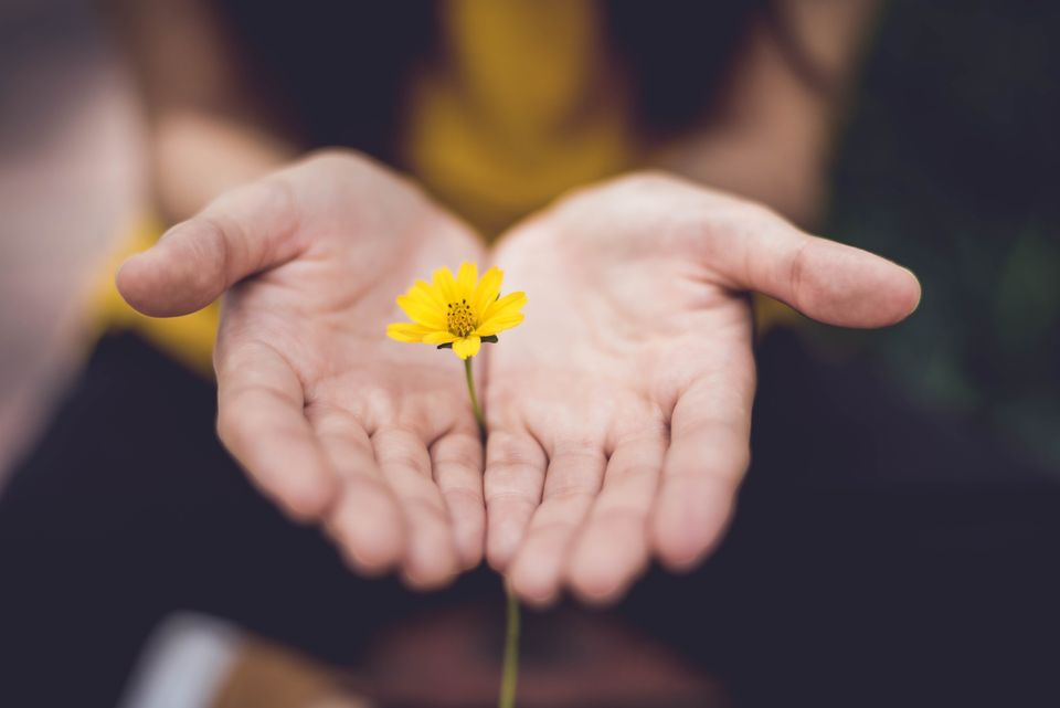 flower in outstretched hands; self-forgiveness in recovery, Castle Craig rehab