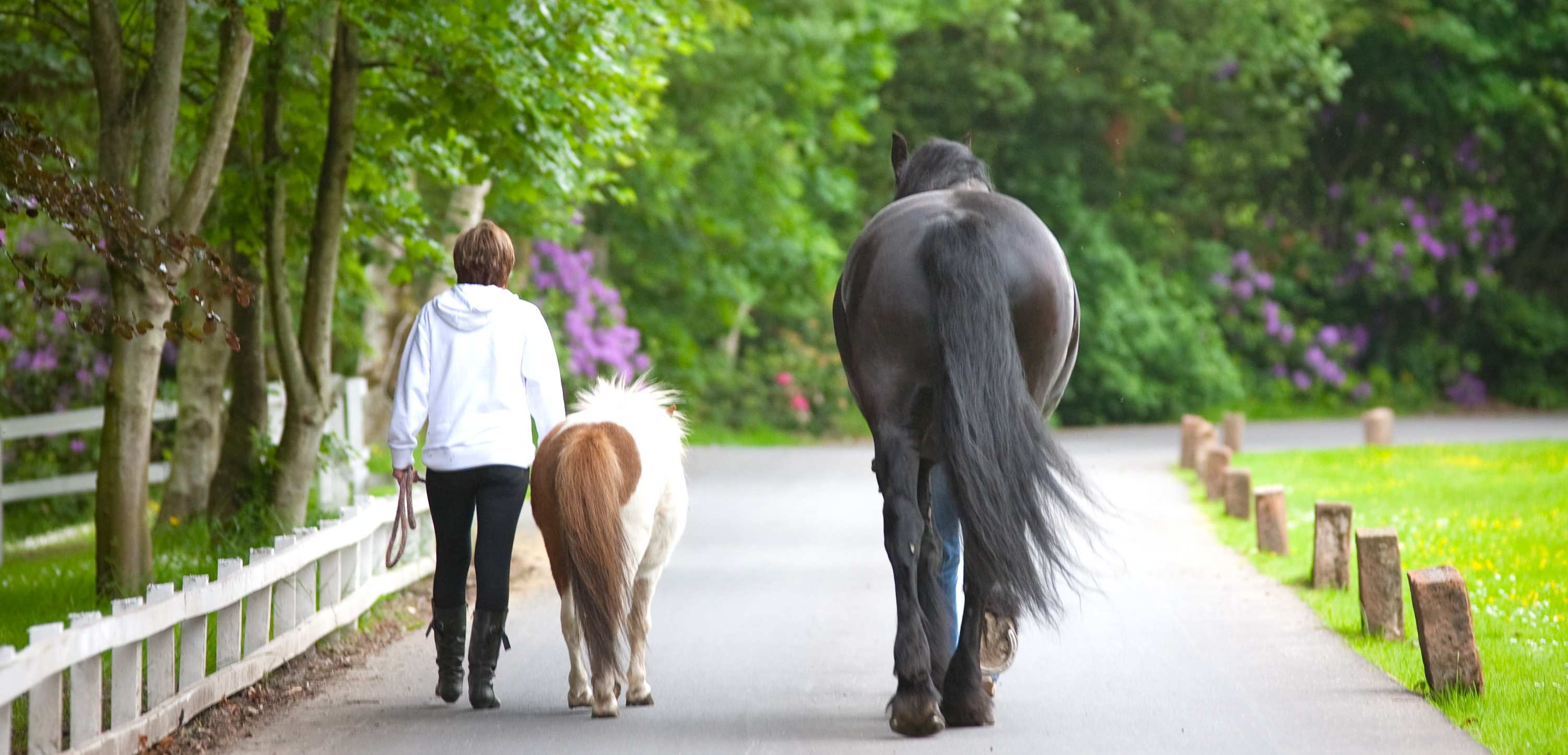 Walking with a horse