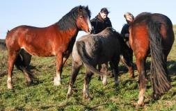 Equine therapy to treat addiction